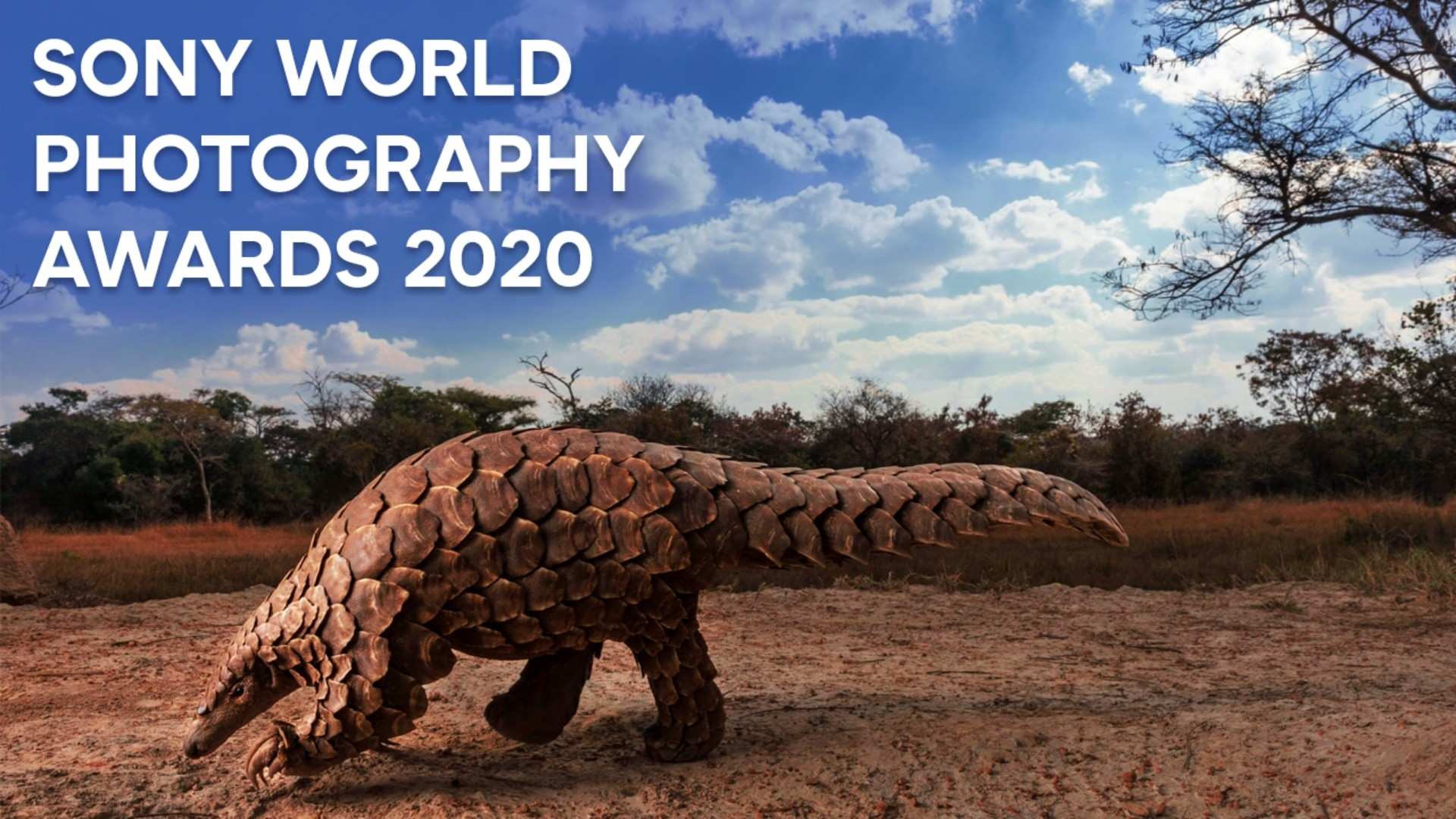 10 лучших работ Sony World Photography Awards 2020