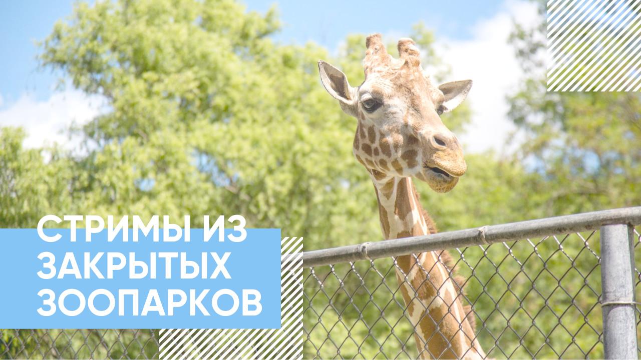 7 крутых стримов из закрытых зоопарков