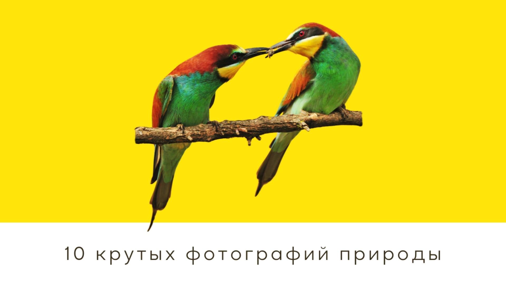 10 крутых фото природы