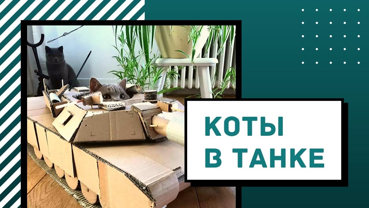 Чем заняться на карантине? Строить танки для кошек!